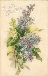 EASTER GREETINGS (opt. in silver)  two sprays of blue lilac, one of white