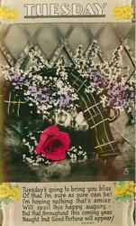 TUESDAY  heather, tartan & roses