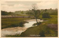 HOLMSLEY LAWNS  stream prominent