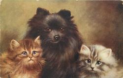 CHUMS  small black pomeranian dog between two kittens