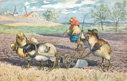 chicks ploughing field