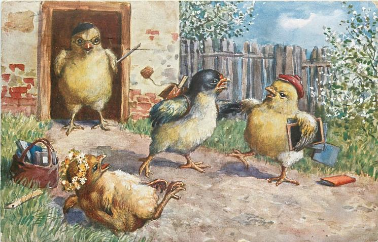 schoolmaster chick stands in doorway observing three chicks squabbling