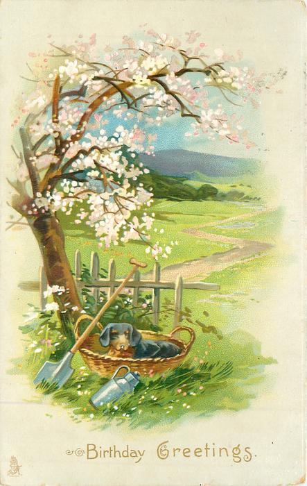 BIRTHDAY GREETINGS  dachshund in basket at foot of blossom tree, rural scene