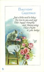 BIRTHDAY GREETINGS two cats on step ladder left, roses right, butterflies
