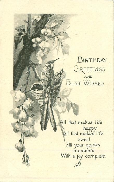 BIRTHDAY GREETINGS AND BEST WISHES two long-tailed birds on nest