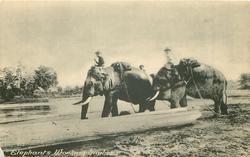 ELEPHANTS WORKING TIMBER  two elephants moving left