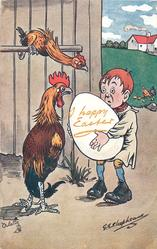 boy collecting an enormous egg is caught by cockerel & scrawny hen