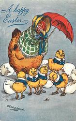 dozy hen stands under umbrella, 5 chicks hatched