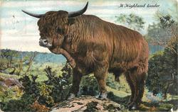 A HIGHLAND LEADER