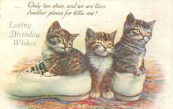 LOVING BIRTHDAY WISHES two kittens in shoes, another on floor between