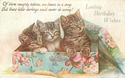LOVING BIRTHDAY WISHES three kittens in box