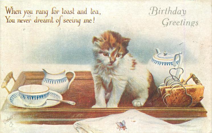 BIRTHDAY GREETINGS kitten on tea tray