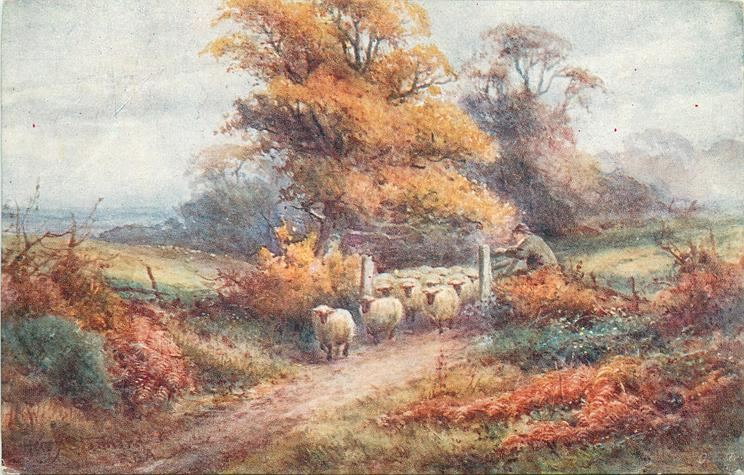 sheep come between two wooden gateposts in centre man leans on gate