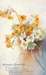 BIRTHDAY GREETINGS  white & yellow narcissi