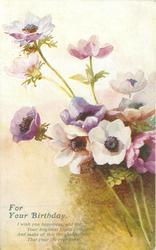FOR YOUR BIRTHDAY  purple & white anemones