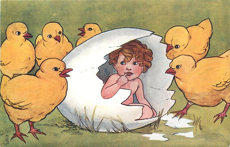 chicks watch child hatching from egg