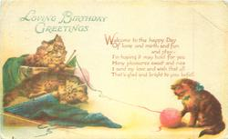 LOVING BIRTHDAY GREETINGS  cats play with knitting