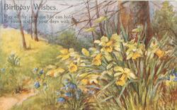 BIRTHDAY WISHES   daffodils & bluebells, wooland scene