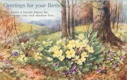 GREETINGS FOR YOUR BIRTHDAY primroses & scattered violets in a rural setting