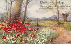 BIRTHDAY GREETINGS   red daisies & snowdrops in a rural setting