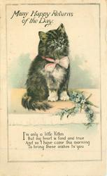 MANY HAPPY RETURNS OF THE DAY black kitten with white paws, forget-me-nots