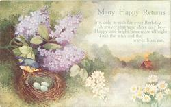 MANY HAPPY RETURNS  bird's nest with three eggs, daisies and lilacs