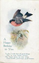 A HAPPY BIRTHDAY TO YOU  bullfinch flies above field