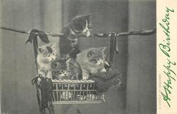 A BASKET OF MISCHIEF  four kittens, one climbing up to rope above