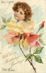 WITH LOVING BIRTHDAY GREETINGS  FROM  girl above pink/yellow rose