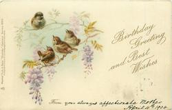 BIRTHDAY GREETING AND GOOD WISHES FROM  three wrens below a sparrow on wisteria