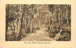 THE PINE WALK, BOSCOMBE GARDENS