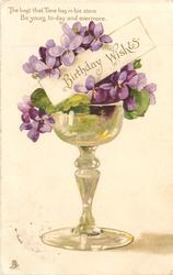 BIRTHDAY WISHES   violets in a wine glass