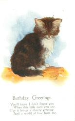 BIRTHDAY GREETINGS deep brown kitten with white front