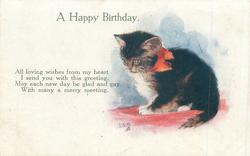 A HAPPY BIRTHDAY  black and white kitten