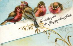TO WISH YOU A HAPPY NEW YEAR  four purple breasted finches