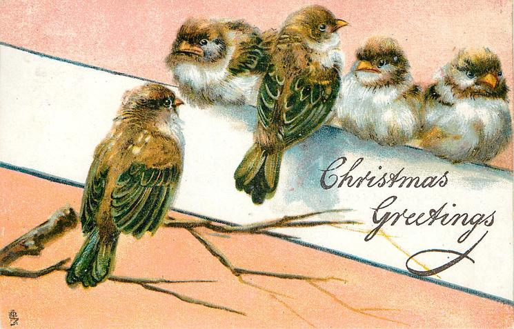 CHRISTMAS GREETINGS  five young sparrows