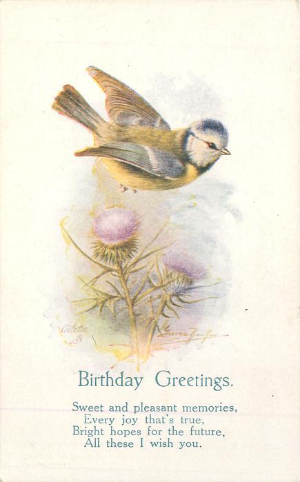 BIRTHDAY GREETINGS blue-tit flies above thistle
