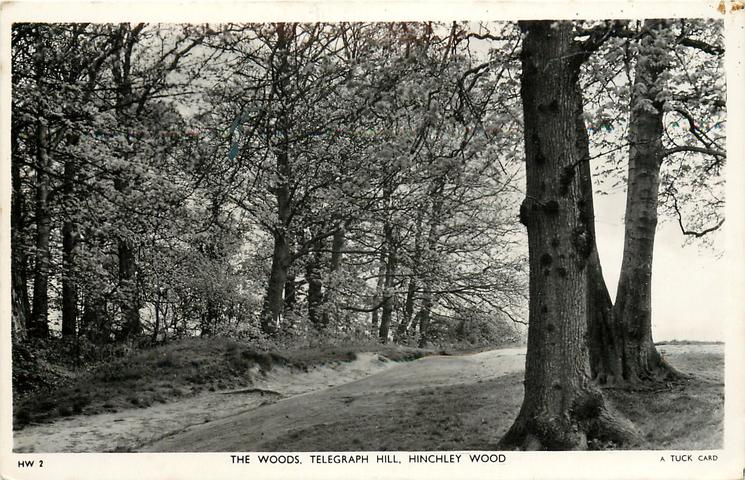 THE WOODS, TELEGRAPH HILL