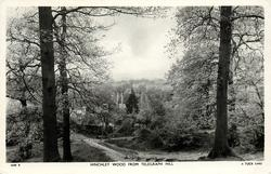 HINCHLEY WOOD FROM TELEGRAPH HILL