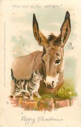 TO WISH YOU A HAPPY CHRISTMAS  donkey with kitten on wall
