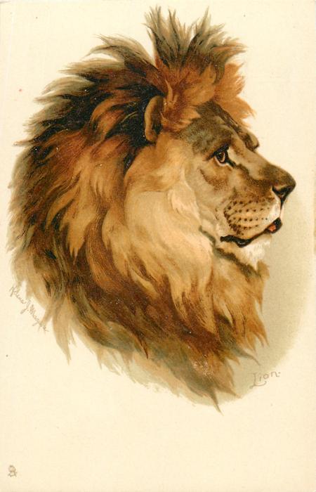 LION  faces right