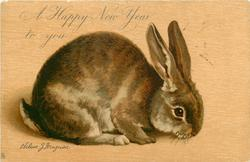A HAPPY NEW YEAR TO YOU or A HAPPY CHRISTMAS TO YOU  rabbit