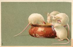 three white mice eating from brown bowl