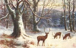 CHRISTMAS GREETINGS  verse, three deer in snowy beech woods