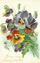 MANY HAPPY RETURNS OF THE DAY many pansies, stalks right