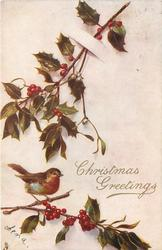 CHRISTMAS GREETINGS robin on branch of holly