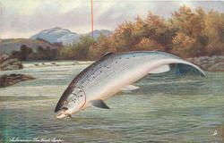 SALMON-THE FIRST LEAP