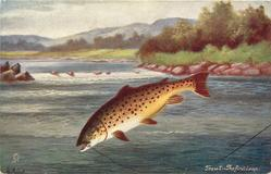 TROUT-THE FIRST LEAP