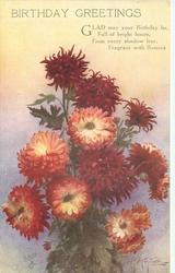BIRTHDAY GREETINGS   deep red & cream  chrysanthemums