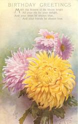 BIRTHDAY GREETINGS yellow & pale purple  chrysanthemums in front of two purple daisies with yellow centres, two pink flowers behind